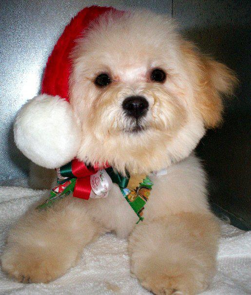 Help Your Dog Look Great for the Holidays in La Habra, CA